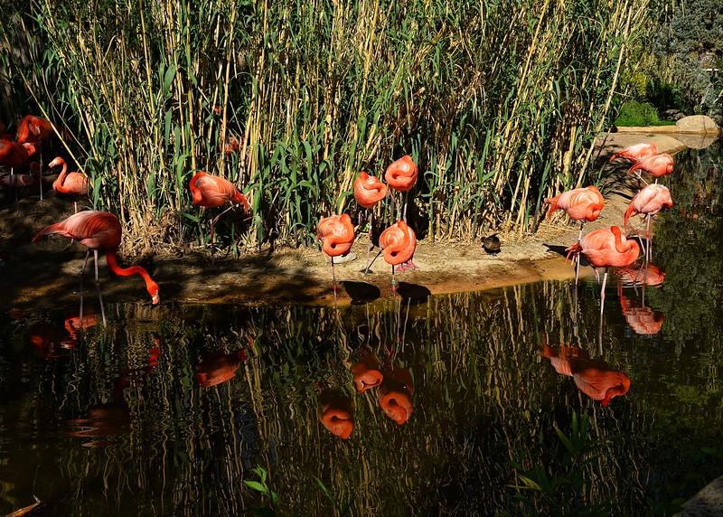 NEA_0656-7x5-Flamingo Reflection.jpg