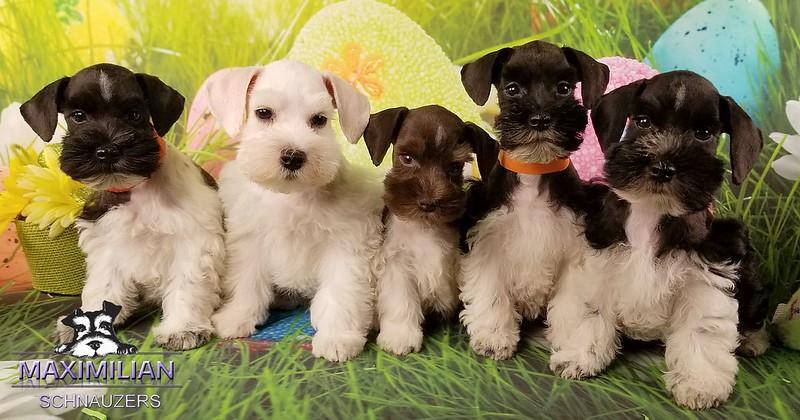 Mystic pups 023.jpg