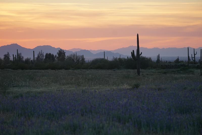 Arizona-j.jpg
