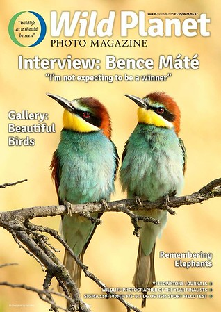 Cover WP24 bee-eaters-4.jpg