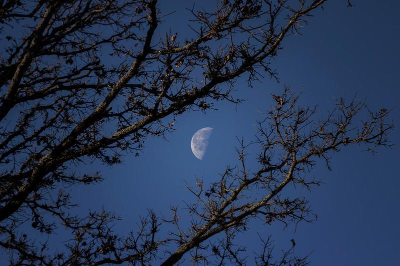 12.09.17 - Prairie Creek Recreation Area : Morning Luna