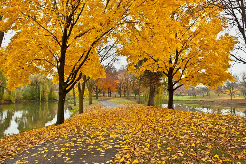 OakBrook fall scene, Illinois
