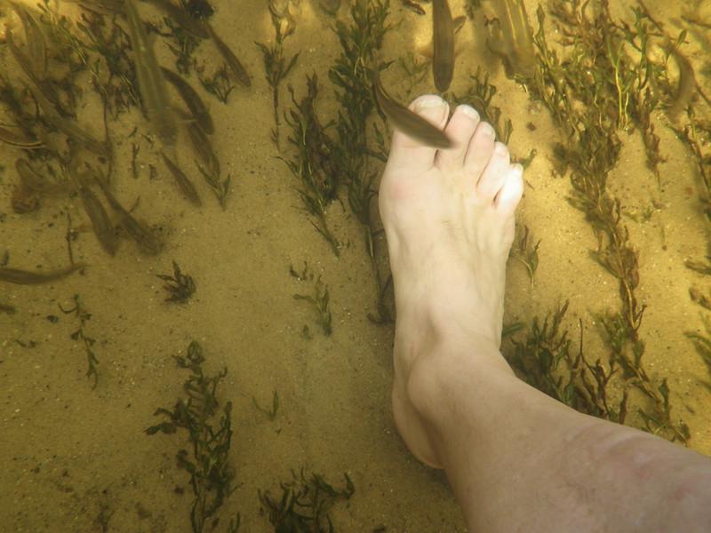 20130824__0340IMGP0349_sucker_river_michigan_near_grand_marasi_michigan_minnows_love_your_toes_in_these_trout_streams.JPG