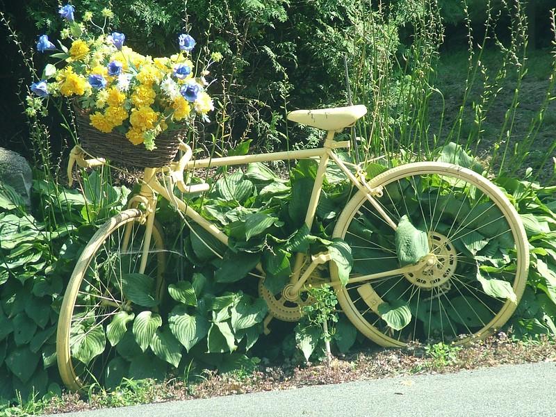 IMG_031- Bike 2314x1735.jpg