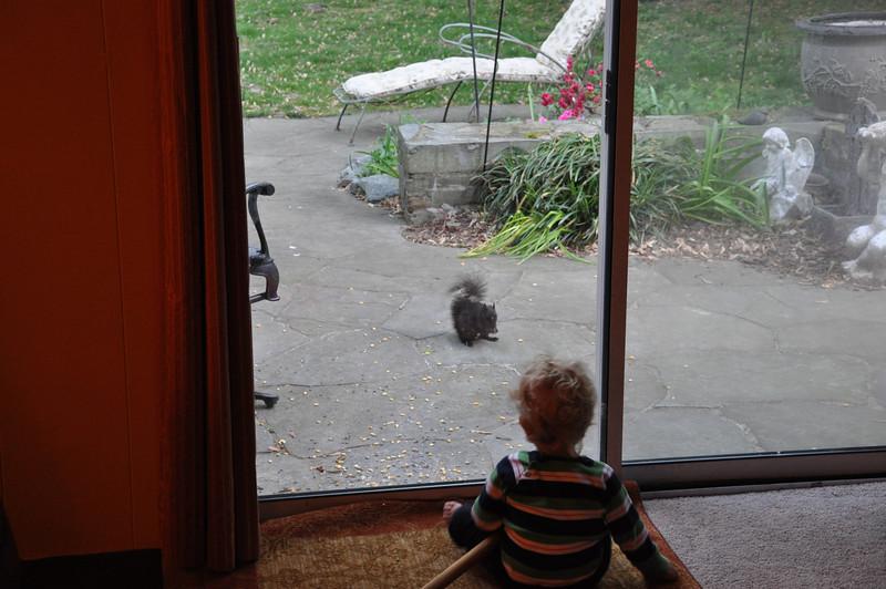 Squirrel in Sean's back yard