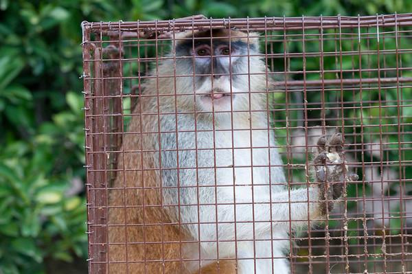 May 14, 2012 Hey Hey It's the monkey lg