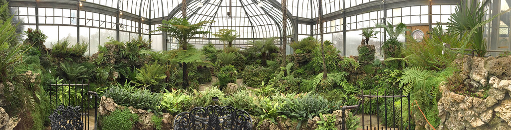. The Fern Room at the Anna Scripps Whitcomb Conservatory on Belle Isle in Detroit. (Andrew Kidd/Digital First Media)