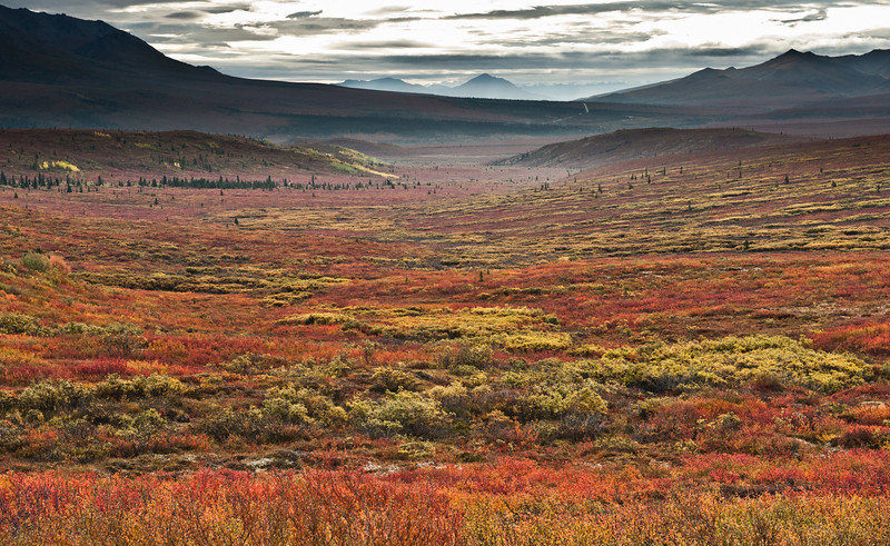 _RQ45387 Denali National Park, Alaska
