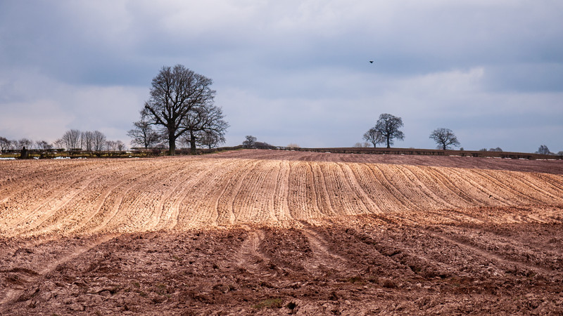 Ploughed field in Cumbria