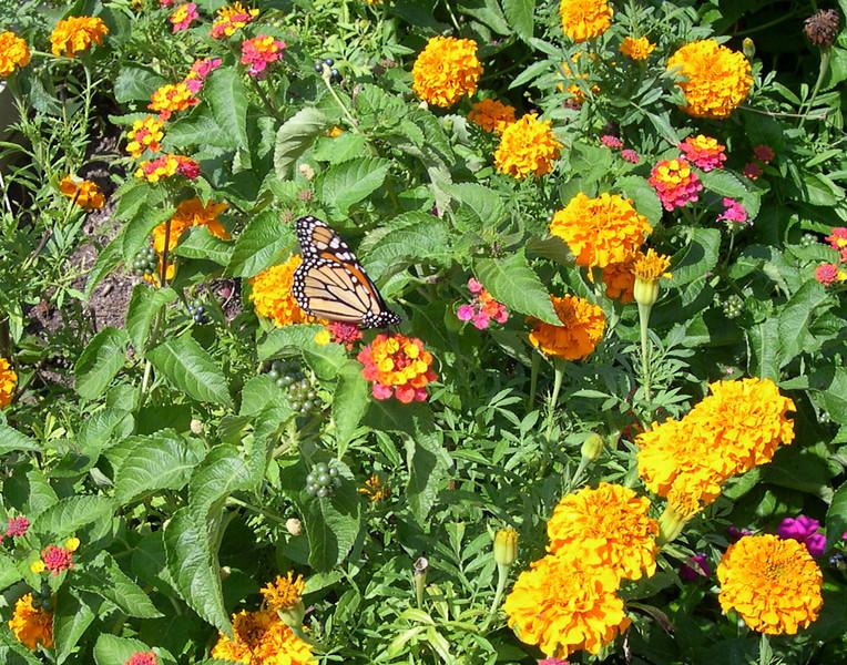 monarch424.jpg