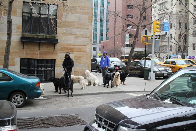 dog walkers meet