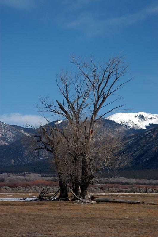 Taos Tree.jpg