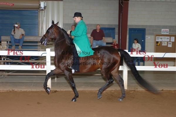 CLASS 016 Classic Pleasure Saddle Limit Horse