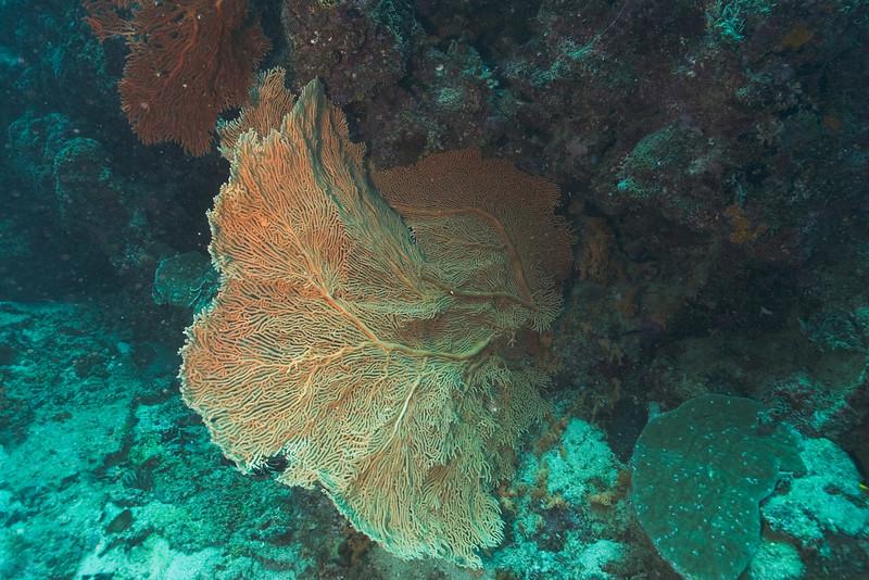 Fan 3, Great Barrire Reef - Cairns, Queensland, Australia