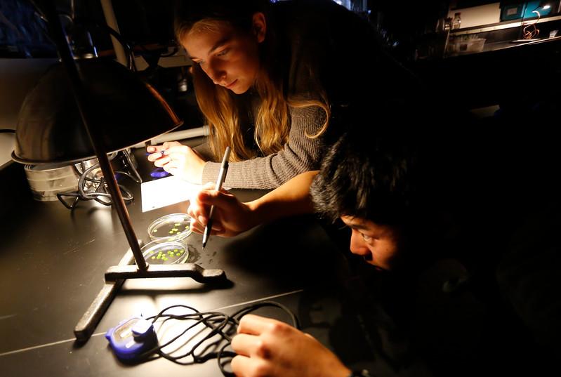 A high school biology experiment.