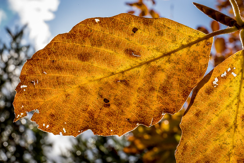 Die Farben des Herbstes als Makroaufnahme