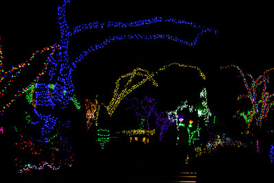 Zoo Lights 2014
