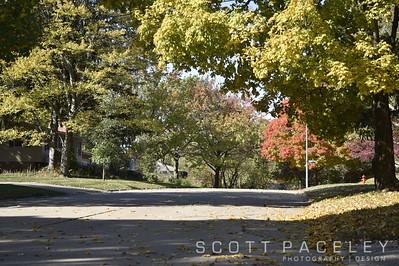 15.019d Urbana Tree Silver St.