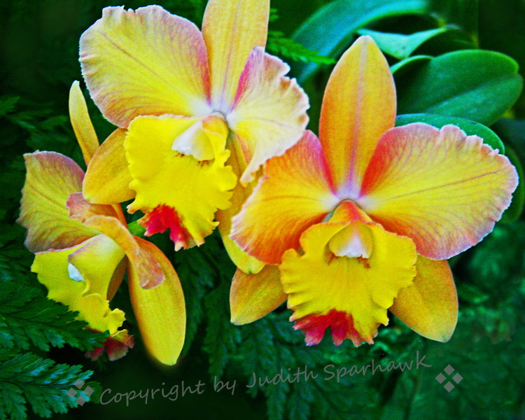 Orchid Bouquet.jpg