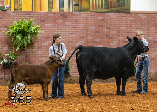 Bred and Owned Females and Cow Calf Pairs