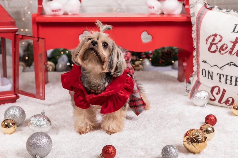 12.10.19 - Leide e Mel's (Mel Pet) Studio Christmas 2019 - -2.jpg