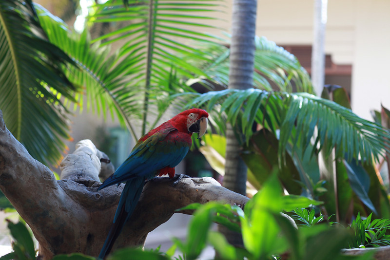 Kauai_D5_AM 195.jpg