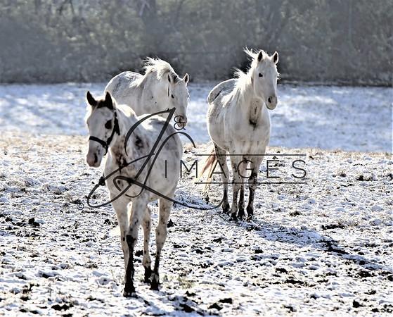Megson Farms - Winter Photographs