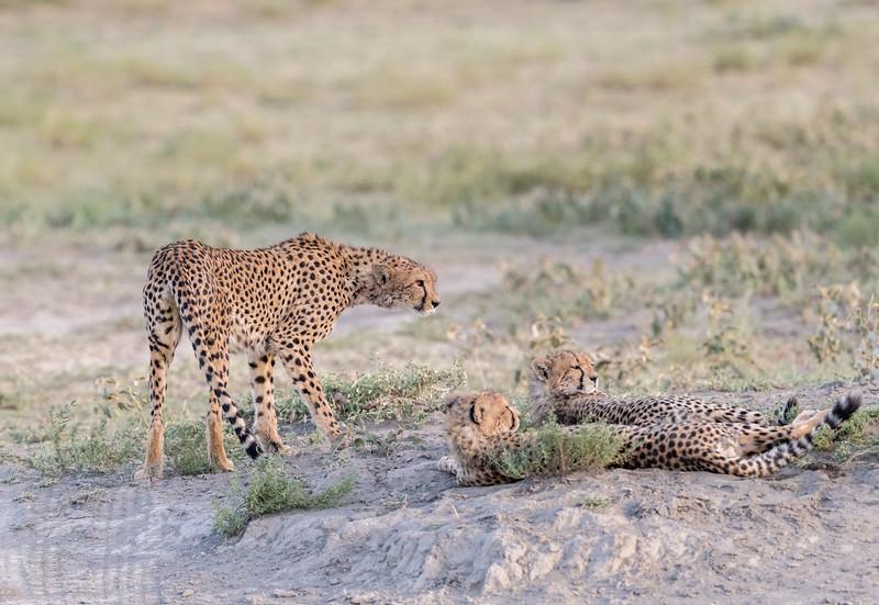 Tanzania_Feb_2018-78.jpg