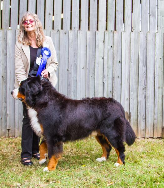 GB Ch 2016 2  2nd Veteran Dog-8843.jpg