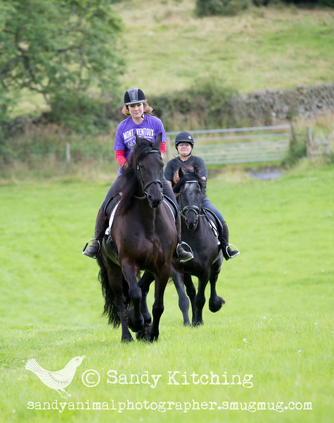 Friesian Experience Cartmel Aug 2015