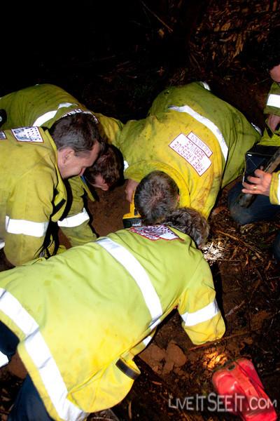 Dog Rescue - Jorgensen Park, Kalamunda WA