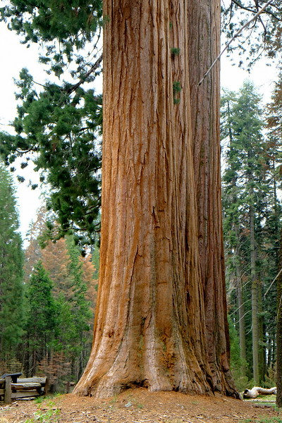 California Day 6 Sequoia 05-30-2017 47.JPG