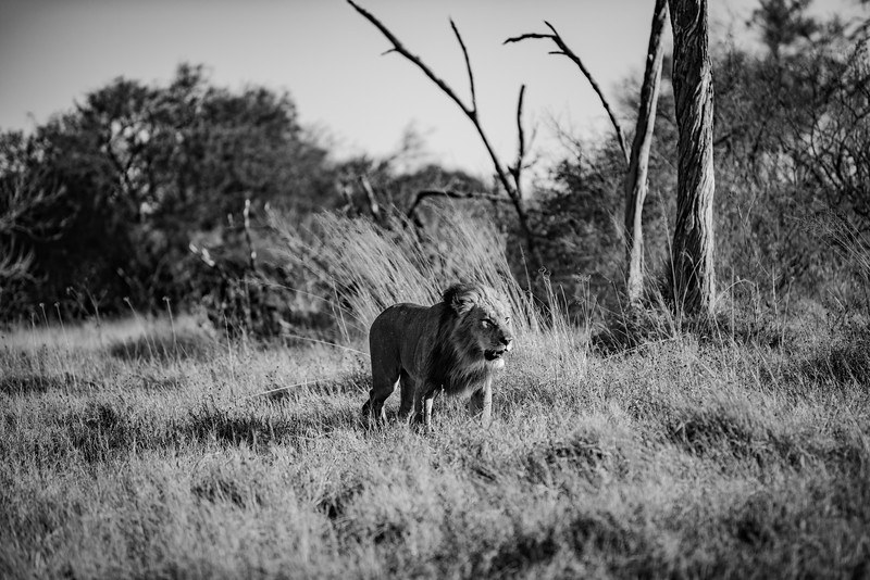 Botswana_June_2017 (3922 of 6179).jpg
