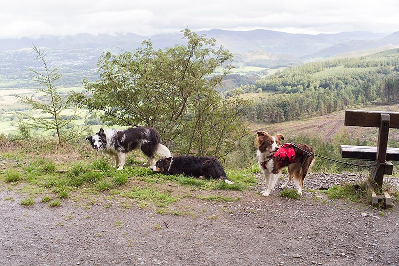 Wed 22nd Aug : Bob's Seat : Three Collies