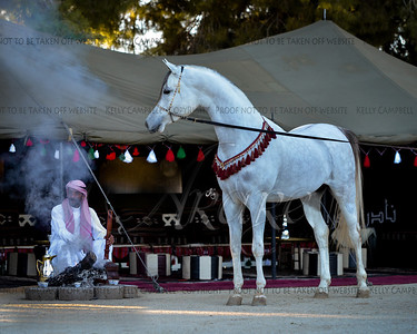 Muhamad's stallion