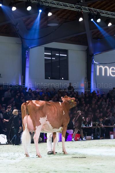 mattenhof-armani-brook_20180112_0006.jpg