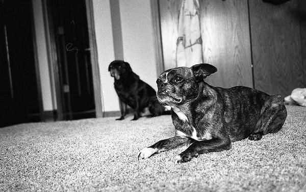 Leica M6 12.16.16 Hp5 800iso HC110