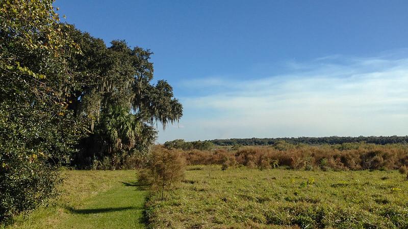 Side trail to giant oak