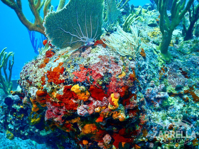 """Colorful Sponges"" (Fishbowl Reef, St. Maarten)"