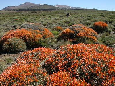 Northern Patagonia III