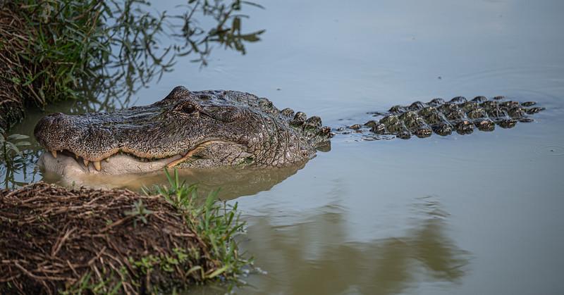 Gator-Country-8375.jpg