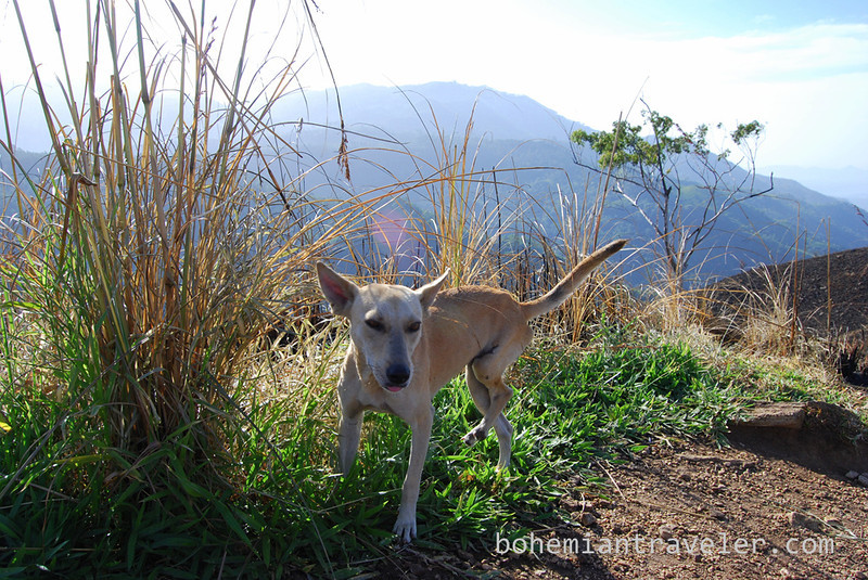 dog atop Small Adam's Peak.jpg