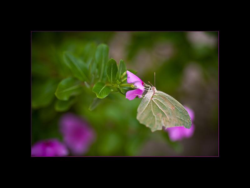 moth 2 small.jpg