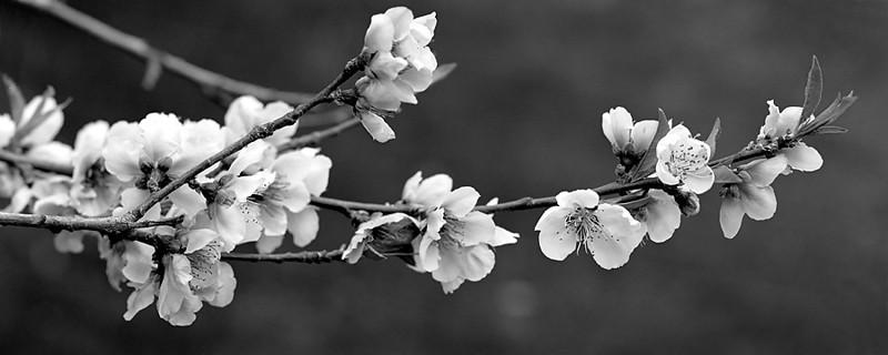 Blossom_A--900.jpg