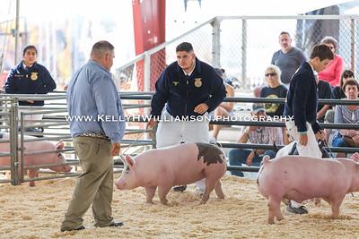 2017 OC Fair Swine
