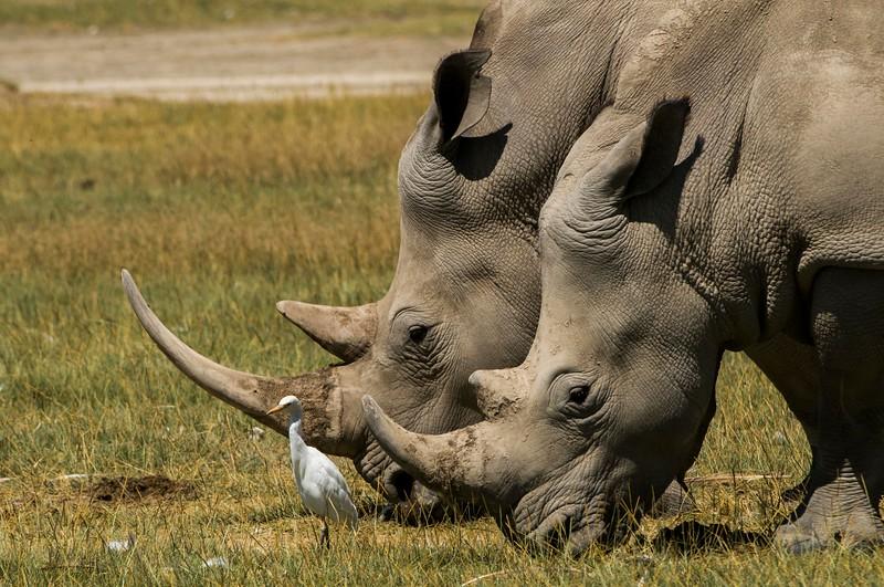 Rhinos-5.jpg