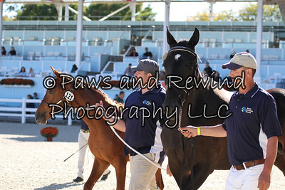 Tuesday Dixon Oval: Class 111 Foal Championship