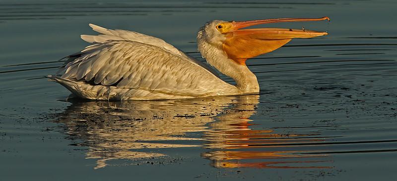 pelicanfishcocktail1600neated.jpg