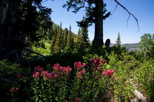 Alexander Basin Hike