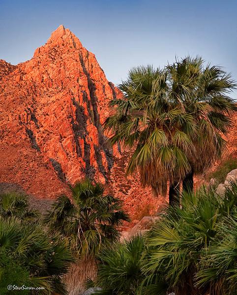 Guadalupe_Peak_Baja_California_Mexico_Panorama b.jpg